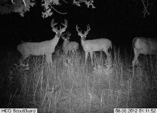 ScoutGuard and Uway trail cameras